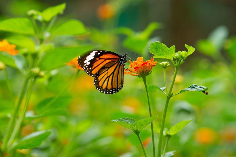 paisajes de flores y mariposas fotos