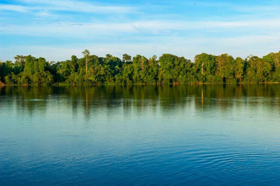 reserva nacional de pacaya samiria flora