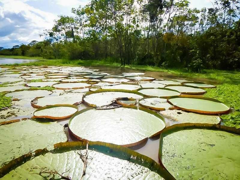 reserva nacional de pacaya samiria fotos