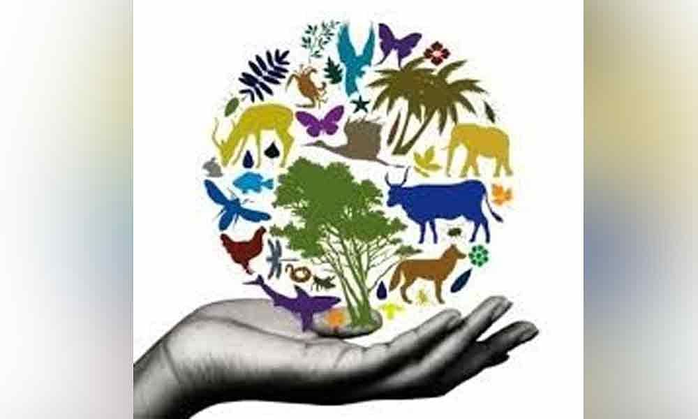 tipos de areas naturales protegidas biodiversidad