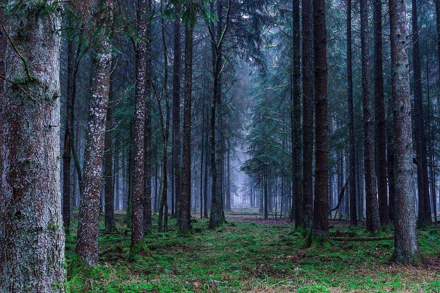 tipos de areas naturales protegidas bosques
