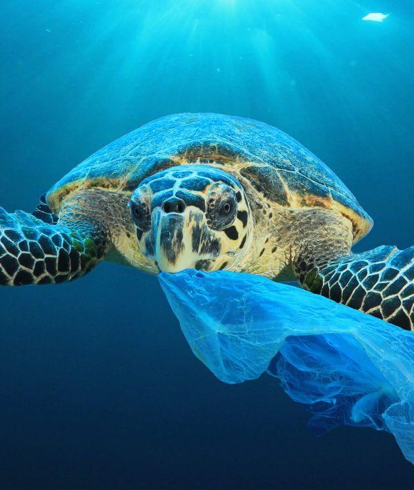 carteles para cuidar el planeta mar